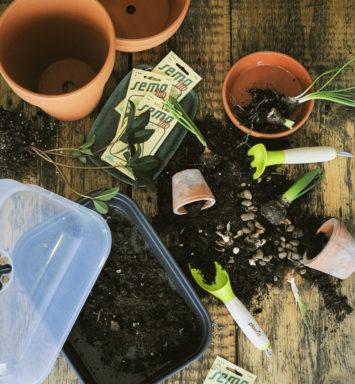 Potřeby pro pěstování